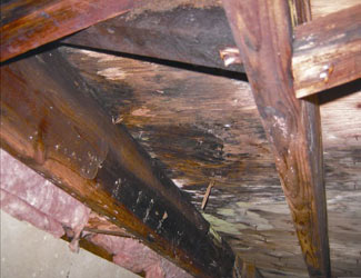 mold and rot in a Houghton crawl space